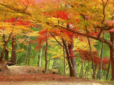 【しそう女子カメラ部】アヤパン 最上山公園のもみじ山。山全体が燃えるように美しく染まる姿はまさに圧巻です。