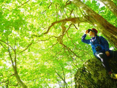 【しそう女子カメラ部】カトパン 森林セラピー基地に認定された宍粟市。セラピーロードでの森林浴は、心身ともに癒されます。